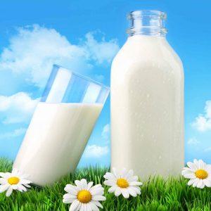 Organic Dairy Milk